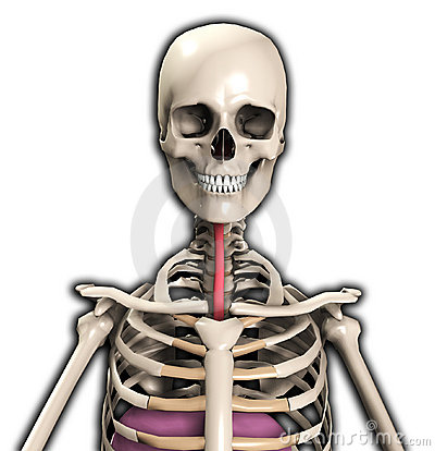 Esqueleto con el tubo del viento