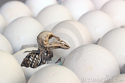 Esqueleto de un pájaro.