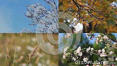 Estaciones - collage con la imagen de la naturaleza en los momentos diferentes almacen de metraje de vídeo