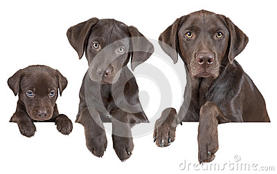 Estágios crescentes do cão