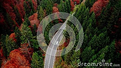 Estrada ao longo da floresta video estoque