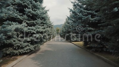 A estrada entre as árvores de espadilha video estoque