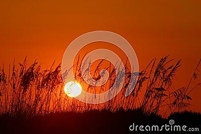 Estremità arancione di giorni