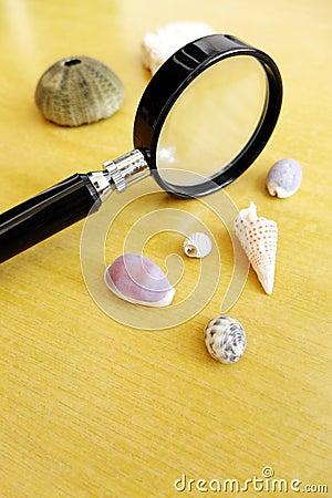 Estudiar shelles del mar como afición de la ciencia
