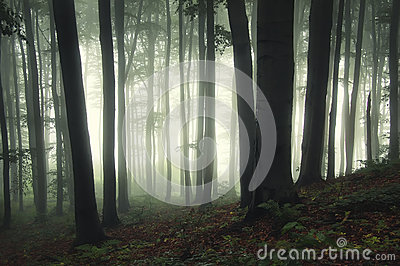 Ethereal forest with fog trough trees