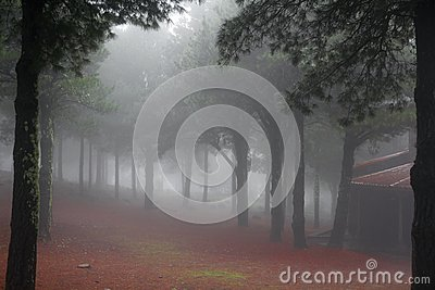 Ethereal misty woodland
