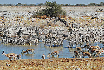 Etosha National Park landscape with pond water