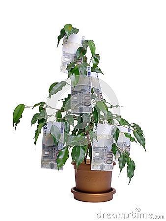 Euro hundra en tree