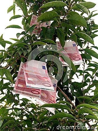 Euro Money Tree