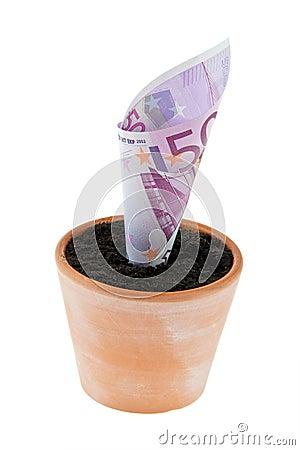 Euro-note dans le bac de fleur. Taux d intérêt, accroissement.