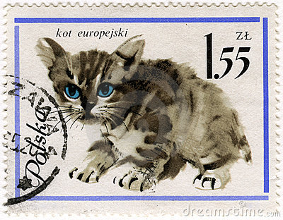 European baby cat on a vintage post stamp