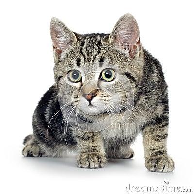 Free European Kitten (3 Months) Royalty Free Stock Image - 3753226