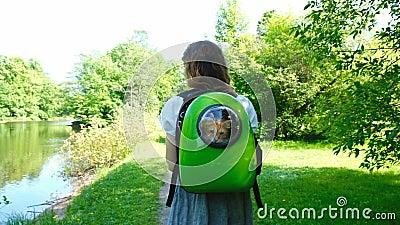 Europejska dziewczyna niesie imbirowego kota niesie kota zerkanie przez nadokiennego porthole w plecaku, zwolnione tempo zbiory wideo