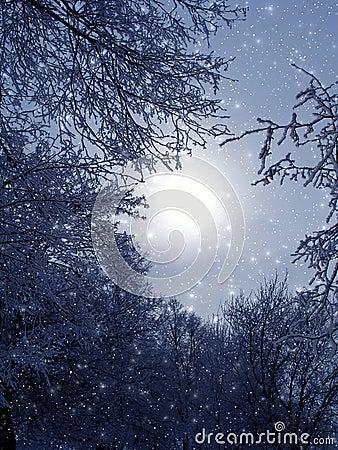 Free Evening Fantastic Light Stock Image - 570611