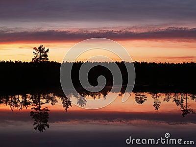 Evening in Viru marsh