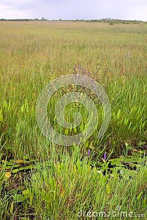 Everglades Grass Landscape