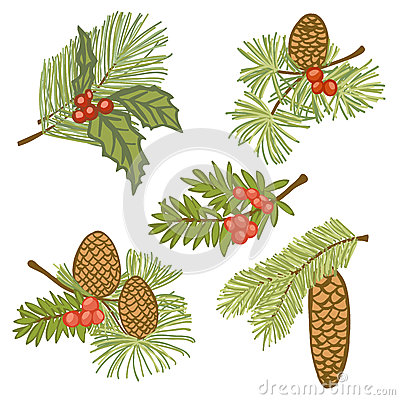 Evergreen branches with cones and berries