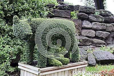 Rome.Evergreen shaped she-wolf