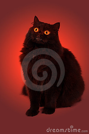 Evil black cat with glowing eyes