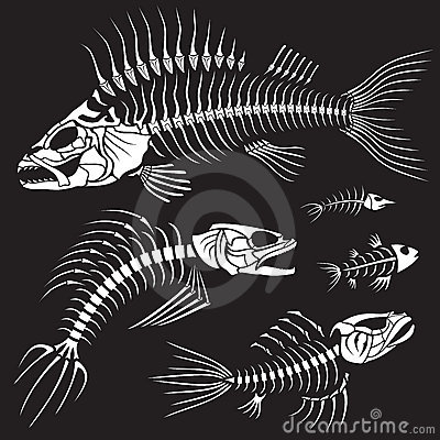 Free Evil Fish Sceleton Collection Royalty Free Stock Images - 7535019