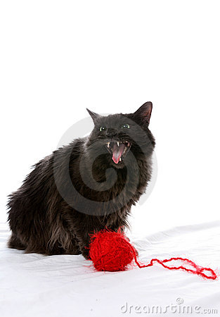 Evil looking cat next to red ball of yarn