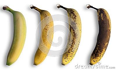 Evolution of the banana