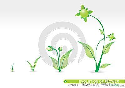 Evolution of Flower