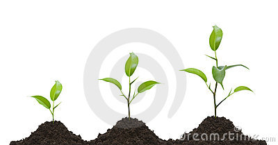 Evolution of a young plant