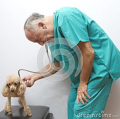 Examining The Canine