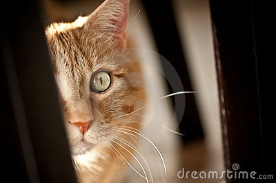 Excited Cat Royalty Free Stock Photo Image 8655505