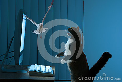 Excited computer user cat
