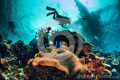 Exciting and busy underwater sea scape