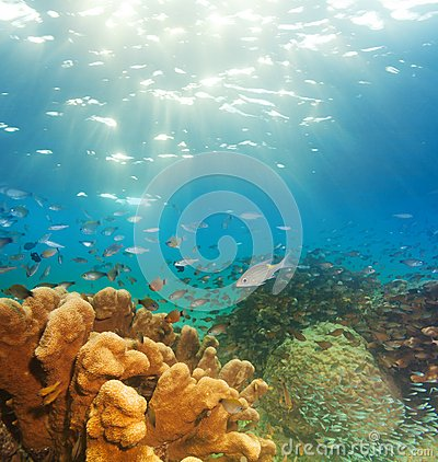 Exciting underwater panorama