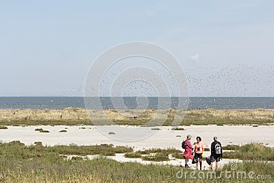 Excursion to tidal island Griend Editorial Stock Photo