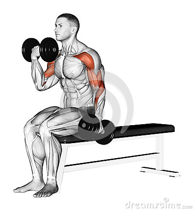 Exercising Alternating Curls With Dumbbells Stock
