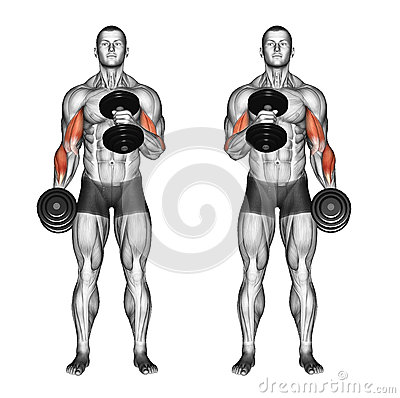 Free Exercising. Cross Body Hammer Curls Stock Image - 68285511