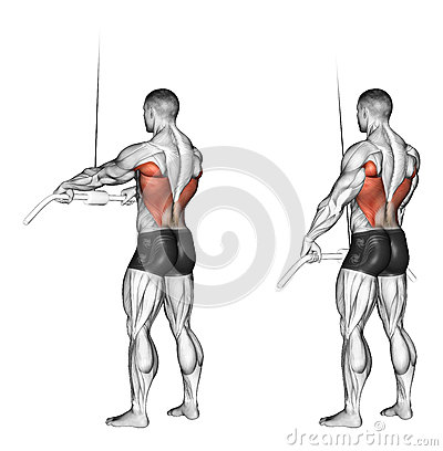 Free Exercising. End Of The Upper Block Straight Arms Royalty Free Stock Image - 43932426