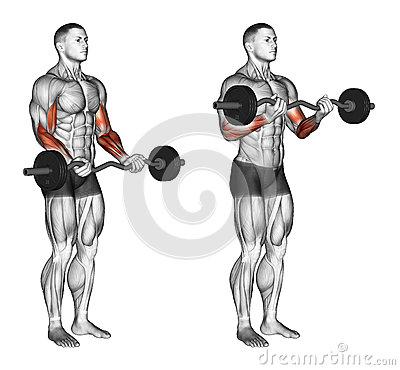 Free Exercising. EZ Bar Curls Stock Photos - 67126643