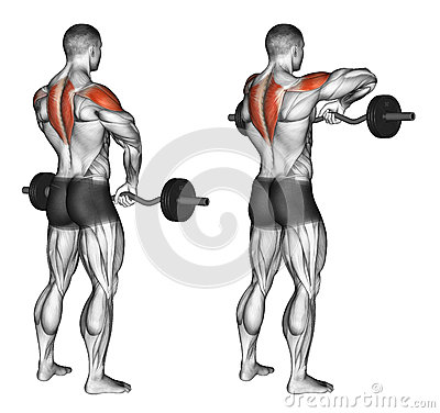 Free Exercising. EZ Barbell Upright Rows Stock Images - 67871854