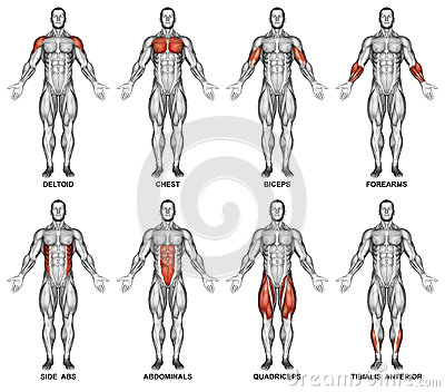 exercising. back projection of the human body stock photo - image, Muscles