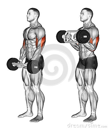 Free Exercising. Olympic Tricep Bar Hammer Curls Stock Images - 67155544