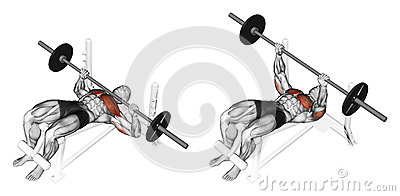 Exercising. Press of a bar, lying on a bench with