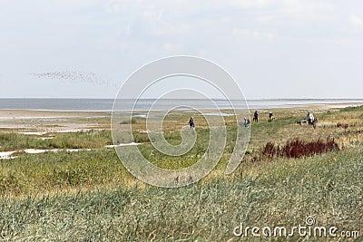 Exkursion zur Sandbank Grient Redaktionelles Stockfoto