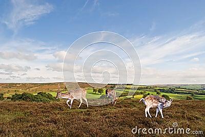 Exmoor Landscape.