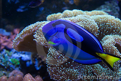 Exotic aquarium fish