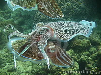 Exotic aquatic sea life