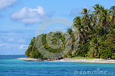 Exotic beach with dense vegetation