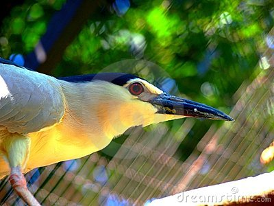 An exotic bird