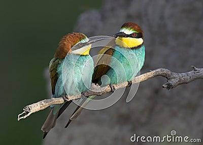 Exotic bird love