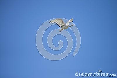 Exotic birds, flying